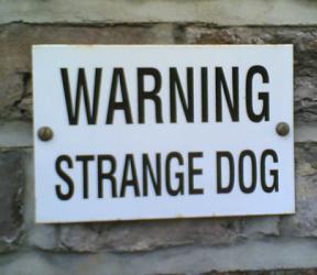 strange_dog.jpg