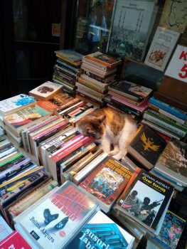 Bookseller cat is sleeping on the job