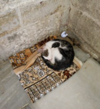 Imam cat is resting in mosque courtyard