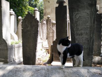Tomb cat makes sure everyone stays dead